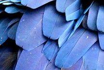 Blue / Azure,Cerulean,Sapphire,Midnight, Indigo,Cornflower,Steel, Turquoise / by Sandra Hendler