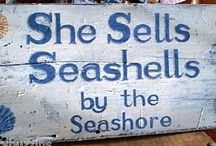 By the Sea - Shells