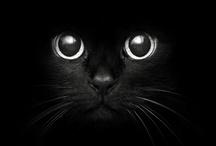 kitty kitty... / by Denise Meier