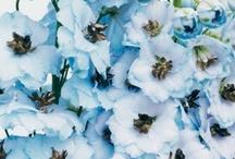 Flowers ~ Blue