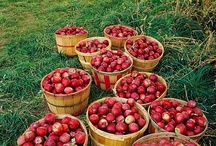 Apples-recipe ideas / All kinds of wonderful things to make with apples.