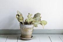succulent + cacti.