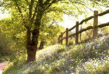 Breyman Orchards Outside / by Fall Bright Farm