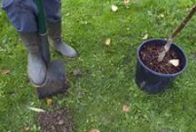 Tree and Shrub Care / Great resources for caring for your trees and shrubs organically!