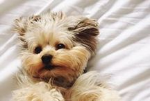 Cute Animal Pics / Some of my favorites of our fur friends / by Bonnie Boyles
