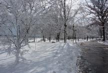 Winter - Assembly Park
