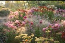 #Planting Design - MyGardenSchool Tutor Hilary Thomas / This is for Planting designs we like. We have several planting design courses at MyGardenSchool  - please come and browse if you want to improve your skills. http://www.my-garden-school.com/courses