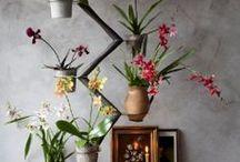 DroomHome ♥ Flowers & Plants