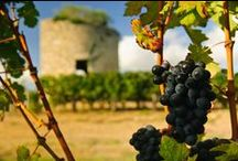 Wines of the World / We share some of our favorite wines, beautiful wine regions and vineyards around the world, and some creative things to do with left over wine bottles and barrels.