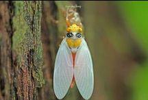 BUGS: Butterflies ~ Moths ~ Dragonflies ~ Caterpillars ~ Cocoons