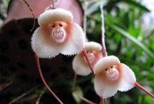PLANTS: Orchids