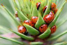 BUGS: Ladybugs ~ Beetles