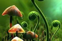 PLANTS: Fungi ༻ Spore ༻ Moss ༻ Ferns ༻ Ivy ༻ Vines ༻ Clover
