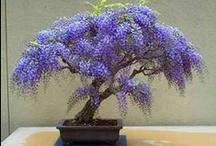 PLANTS: Succulents ~ Cacti ~  Bonsai ~ Air Plants