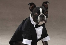 Wedding Pets / Best for Bride invites you to browse thoroughly the finest selection of unique designs of Pets Bridal Collection. www.bestforbride.com/showPetsClothes/PetEdge.php