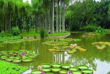 WATER: Features / Water Gardens ~ Water Fountains ~ Lily Ponds ~ Man Made Ponds & Water Falls ~ Creeks...