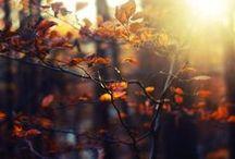 Autumn - my alltime favorite season