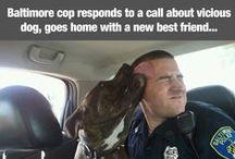 Animal News! / by Hendrick & Co.