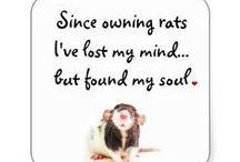 ♥ Pet Rats ♥ / #rats
