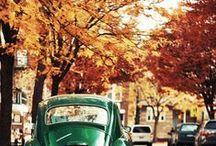 I L.O.V.E. Autumn / by Bubble Trump Ltd