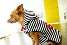 DOG COAT PATTERNS