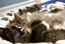 Sleeping Kitties / by Dan Wilhelm