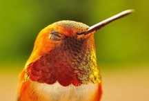 Hummingbirds / Legends say that hummingbirds float free of time, carrying our hopes for love, joy and celebration.  / by Mary Charette