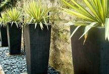 Container gardening / Terasse-hage