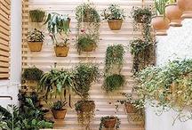 """Gardens/ Plants/ Succulents/Cactus / """"Quem planta um jardim, acredita no amanhã."""""""