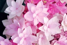 Flowers / by Tallie Ehman