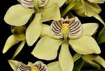 Orchids / Majestosas, sofisticadas, raras.......uma dádiva da natureza!