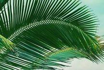 Farbspiel - vielseitiges Grün / Gudrun Sjödén stellt nicht nur Grüne Mode aus Naturmaterialien her, sondern verwendet auch viel die Naturfarbe Grün für Ihre Kleider, Hosen und Shirts. Lasst euch inspieren mit welchen Elementen der Erde diese Mode mit langlebigem Design in Verbindung gebracht werden kann.