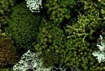 FOREST GREEN INTERIOR INSPO