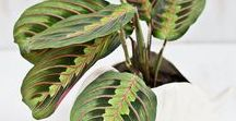 PLANTS INDOORS / Bringing the outside in with beautiful plant decor