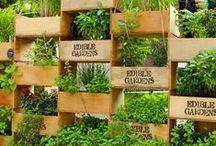 Garden & Outdoors / Auf dieser Pinnwand findest du viele tolle Ideen rund um das Thema Garten und Balkon. Ob Gartenliegen aus alten Paletten, selbstgebaute Rankhilfen, Gestaltungstipps oder geniale Pflanztricks - hier wirst du mit Sicherheit fündig.