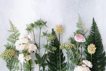 Flora / by Stephanie Lefebvre