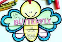 Class Butterflies