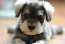 Adorably Precious!