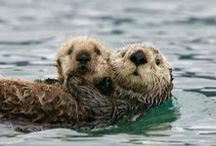 Otters....Thats right I Love Otters / by Janet Lajoie