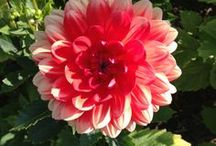 Out in the Garden / Inspiration and ideas for your garden from the Stonewall Kitchen garden's. / by Stonewall Kitchen