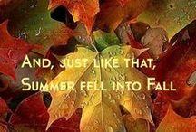 Autumn's Splendor / by Elaine Gitzel