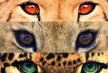 Spirit Animals / Animals We Love