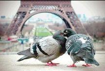 Parijs / Hotels die de moeite waard zijn, veelal zeer sfeervol of trendy:  • Banke • Terrass • New Roblin • Les Jardins du Marais • Select • Jules • Le Meridien Etoile • Mercure Terminus Nord