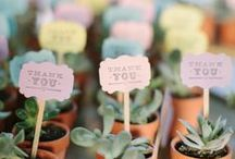 Frugal Wedding / Frugal wedding decor + planning. Wedding DIYs and frugal food!