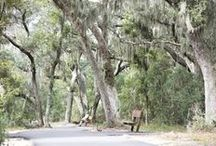 Get Back to Nature / Enjoy the outdoors and natural beauty of the Alabama Gulf Coast