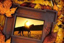 Cowgirl I Am / by Cowgirl I Am