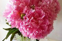 Fleurs / Bringing fabulous flowers inside.