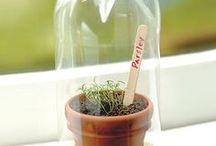 Want Her - Home Garden / growing vegetables