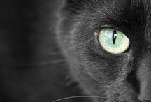 Black Cats / by Chaeli Marie Nylund