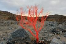 Red / by Erin Biggerstaff